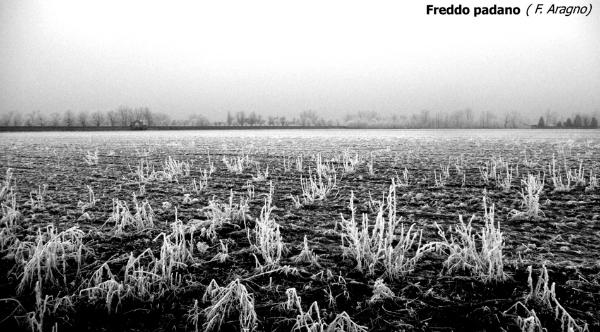 078-freddo-padano