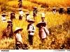 043-vietnam-1981
